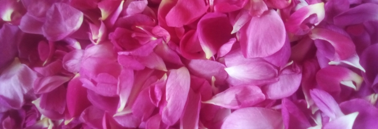 bosenské růže.jpg